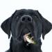 犬、猫が虫をガブガブ食べる…!!これって大丈夫なの?っていうか普通?